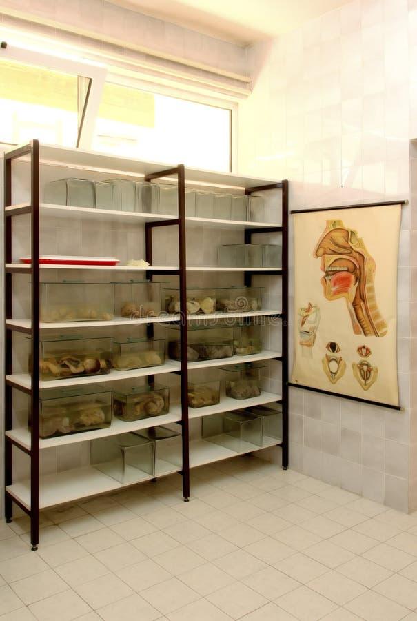 Sitio 3 de la anatomía fotografía de archivo