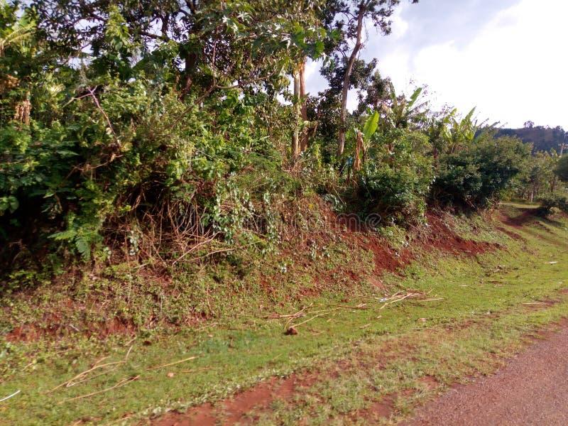 Sitio del camino en el pueblo de Arokwo cerca de la ciudad de Kapchorwa, Uganda del este foto de archivo libre de regalías