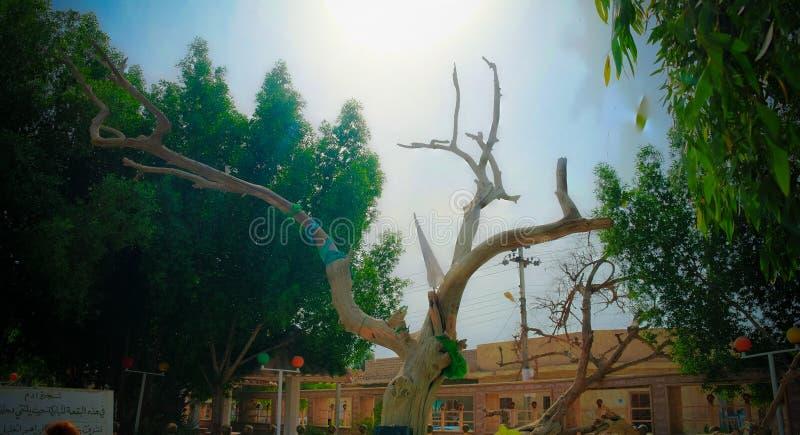 Sitio del jardín de la biblia de Eden y del árbol antiguo del conocimiento, al-Qurna, Iraq imagen de archivo libre de regalías