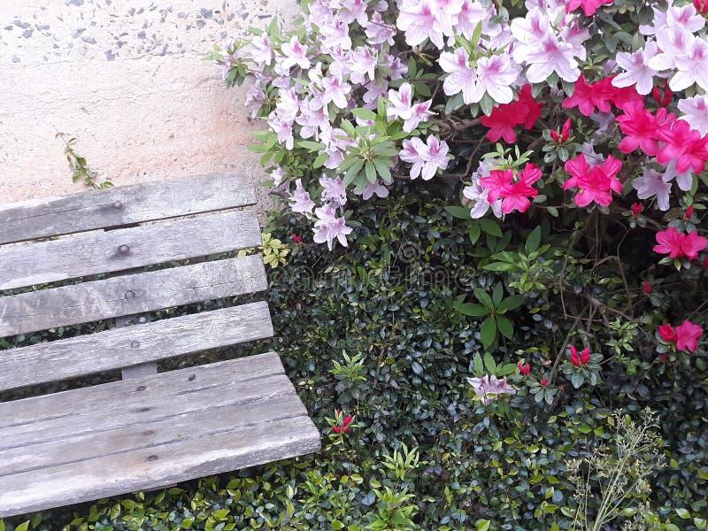 Sitt nära blommorna arkivbilder