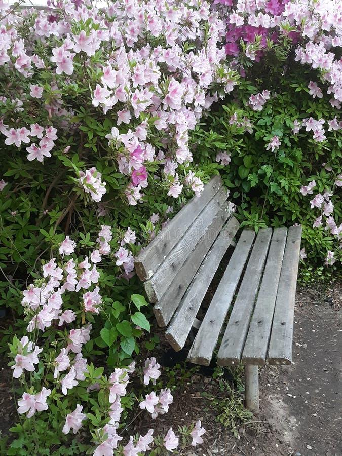 Sitt nära blommorna royaltyfri foto