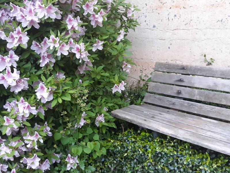 Sitt nära blommorna arkivfoto