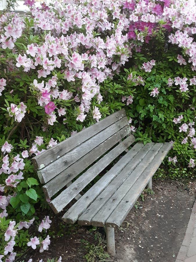 Sitt nära blommorna fotografering för bildbyråer