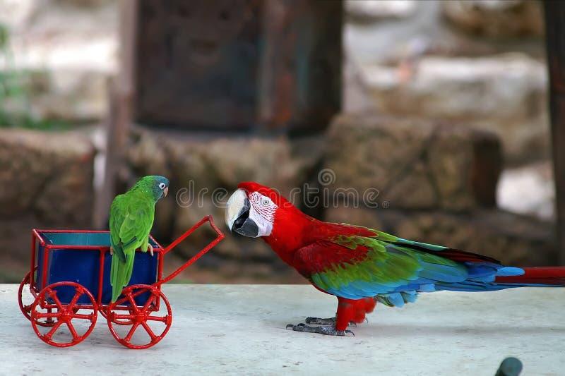 sitta barnvakt papegoja arkivfoto