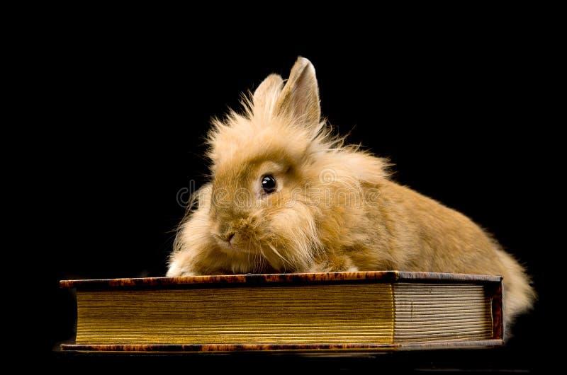 sitta för kanin för bok som brunt fluffigt är litet arkivfoton