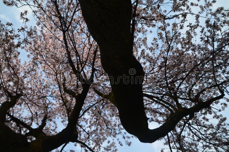 Sitta under våren arkivbilder