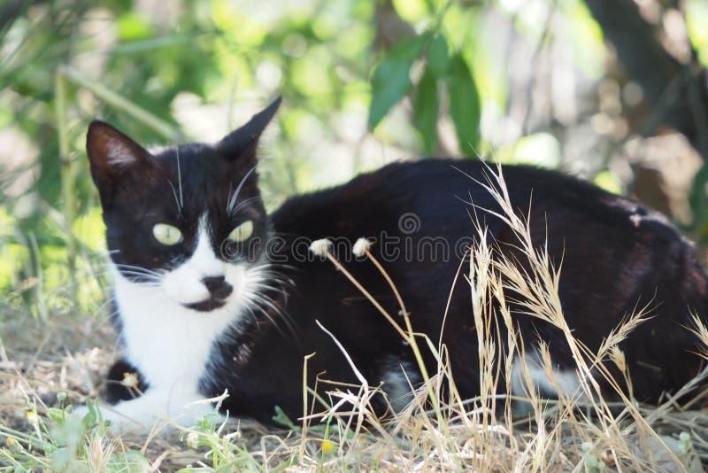 Sittande hålla ögonen på för katt tajma för att passera, lleida arkivfoton