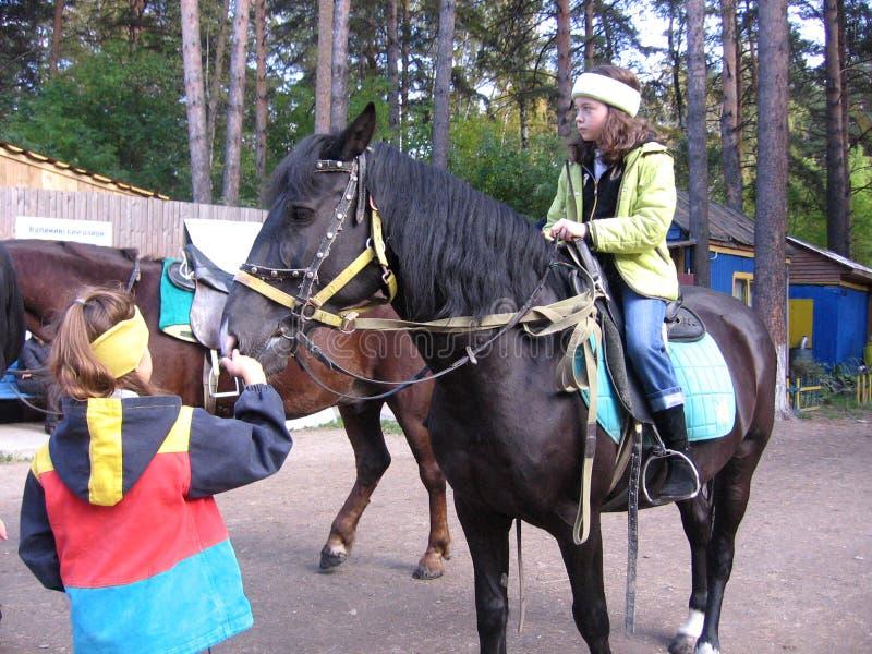 Sittande ridning för flicka på hästrygg på den rid- mitten Sosnoviy Bor i Novosibirsk sommarhyra arkivbild