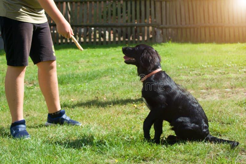 Sittande stående för svart hund - labradorbland och apportör royaltyfria foton