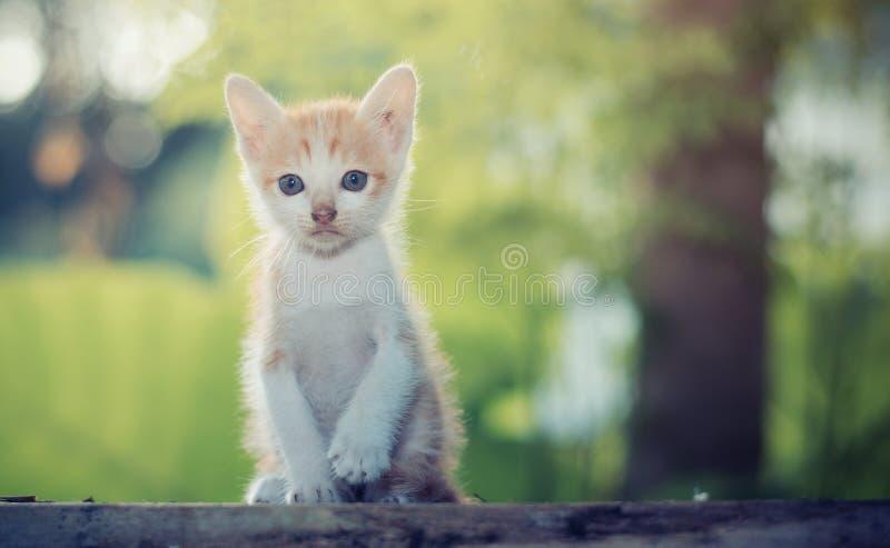 Sittande stirra för älskvärd kattunge på något royaltyfri foto