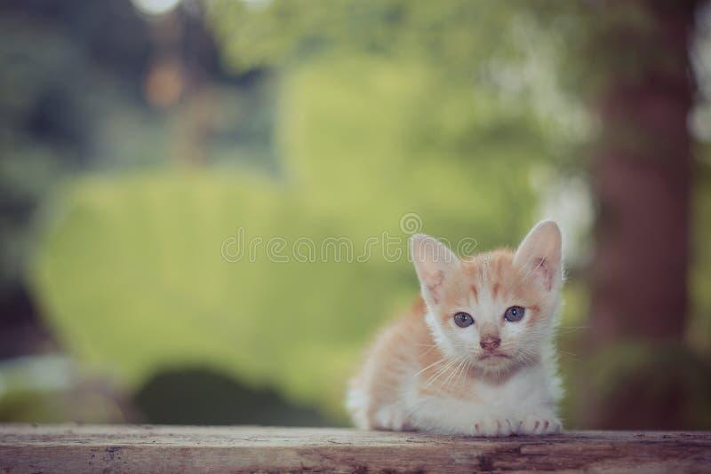 Sittande stirra för kattunge på något arkivfoton