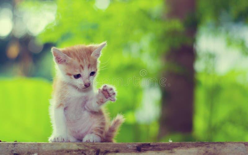 Sittande stirra för kattunge på något Lyft benet arkivbild