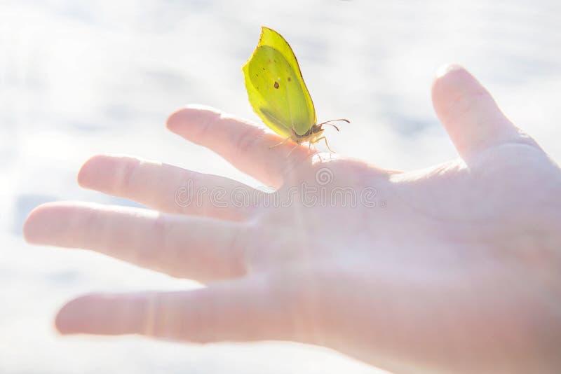 Sitter den gula fjärilen för den första våren i stillhet på ett öppet barn gömma i handflatan mot suddig snöbakgrund royaltyfria foton