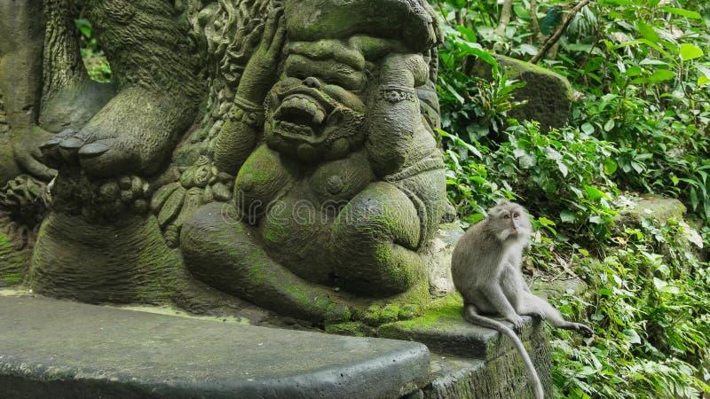 Sitter den långa tailed macaquen för balinesen bredvid en staty royaltyfri foto