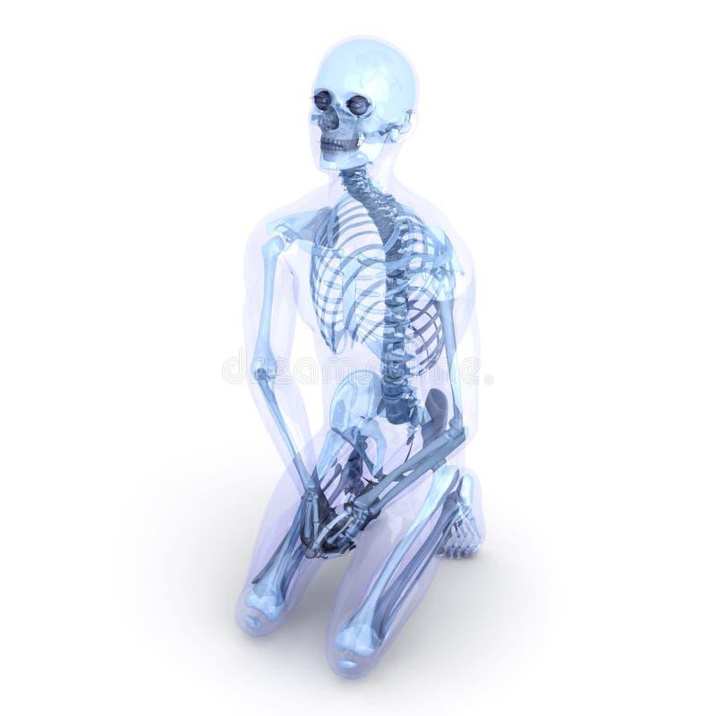 Sitting Anatomy Royalty Free Stock Photo