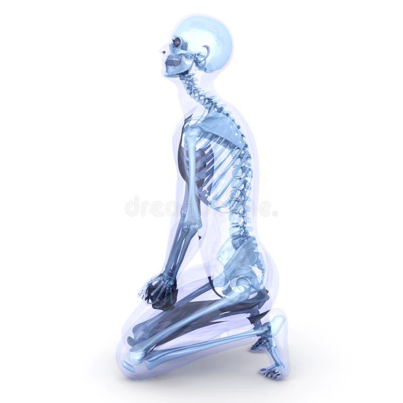 Sitting Anatomy royalty free illustration