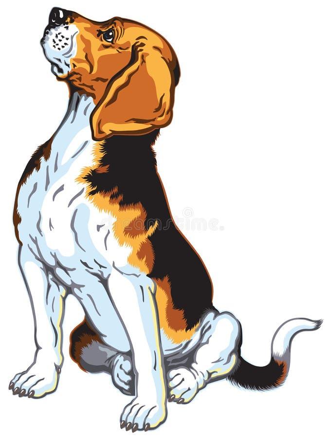 Sitting beagle dog. Beagle hound dog, sitting pose, isolated on white background vector illustration