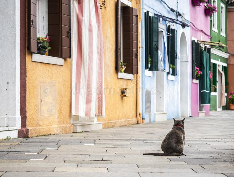 Sitting cat in Burano. Sitting cat in the colorful village of Burano, Italy stock images