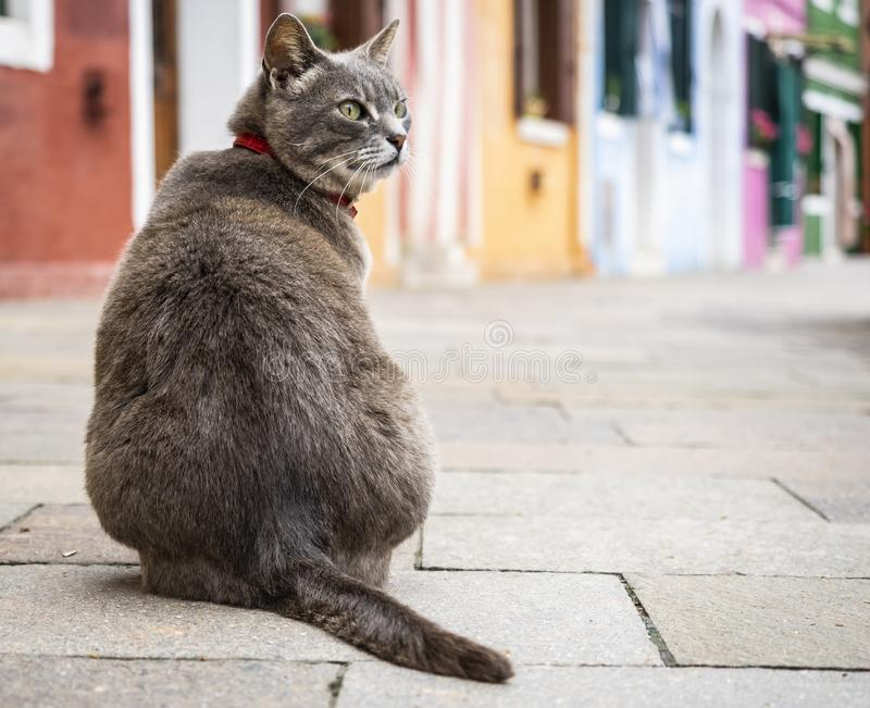 Sitting cat in Burano. Sitting cat in the colorful village of Burano, Italy royalty free stock images