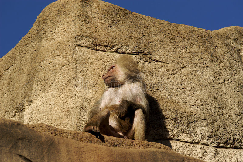 Sitting on the top a rock royalty free stock photo
