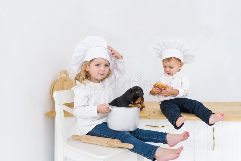 sittting在桌上的两位小厨师在有达克斯猎犬小狗的厨房里  图库摄影