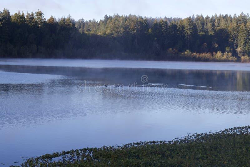 Situé le long de la rivière russe, le parc régional de façade d'une rivière est juste des minutes de Windsor et de Healdsburg du  photo libre de droits