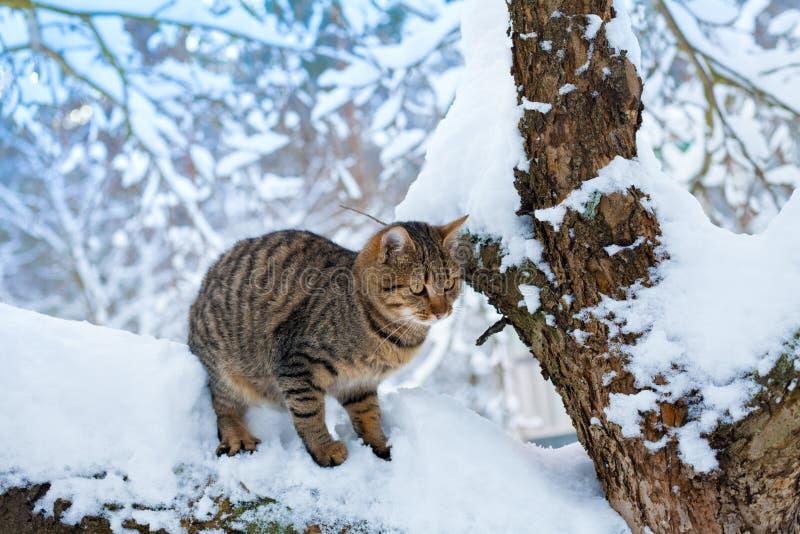 Situação do gato na árvore nevado imagens de stock royalty free