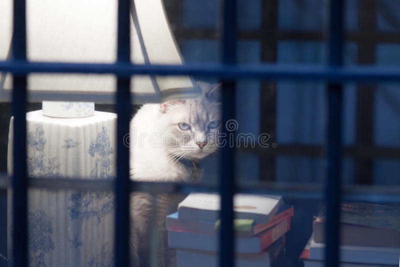 Situação do gato na mesa ao lado da lâmpada foto de stock