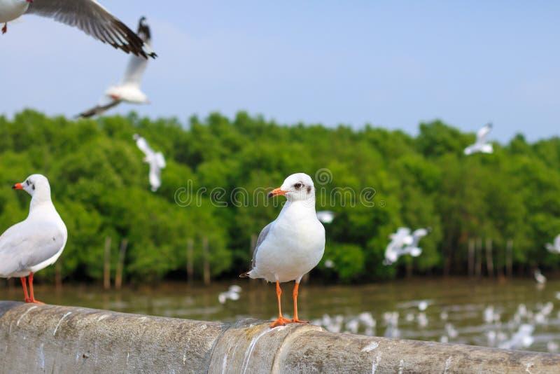Situación blanca de la gaviota en el puente en fondo de la naturaleza foto de archivo