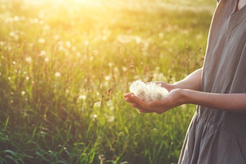 Situaci?n de lino feliz del vestido de la mujer que lleva joven en la luz del sol que sostiene las flores hermosas del diente de  foto de archivo libre de regalías