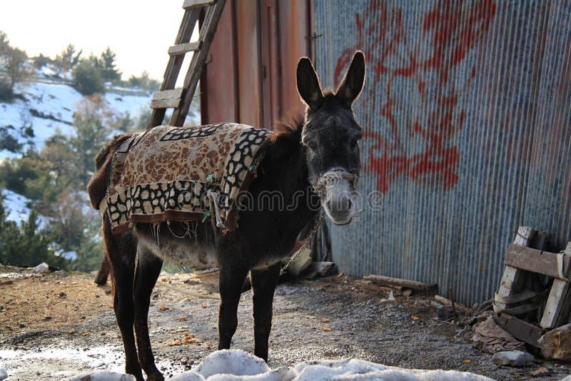 Situación del burro imagen de archivo libre de regalías