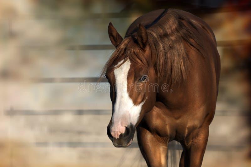 Situación del caballo imágenes de archivo libres de regalías