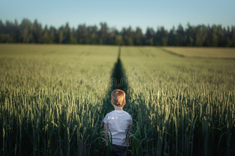 Situación linda del niño pequeño en campo verde en día de verano Visión posterior fotografía de archivo