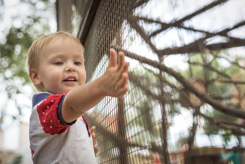 Situación sonriente del niño pequeño hermoso en la cerca con los animales en el parque zoológico que estira adelante la mano imagen de archivo libre de regalías