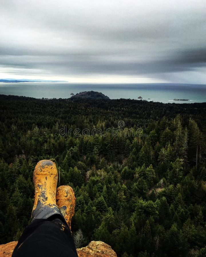 Sitzen über dem Wald lizenzfreie stockfotos