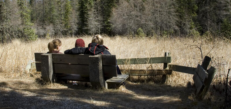 Sitzen auf einer Bank im Wald lizenzfreie stockfotografie