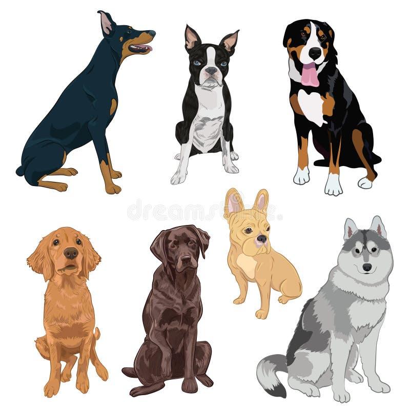 Sitzende Hundesammlung lokalisiert auf weißem Hintergrund lizenzfreie abbildung