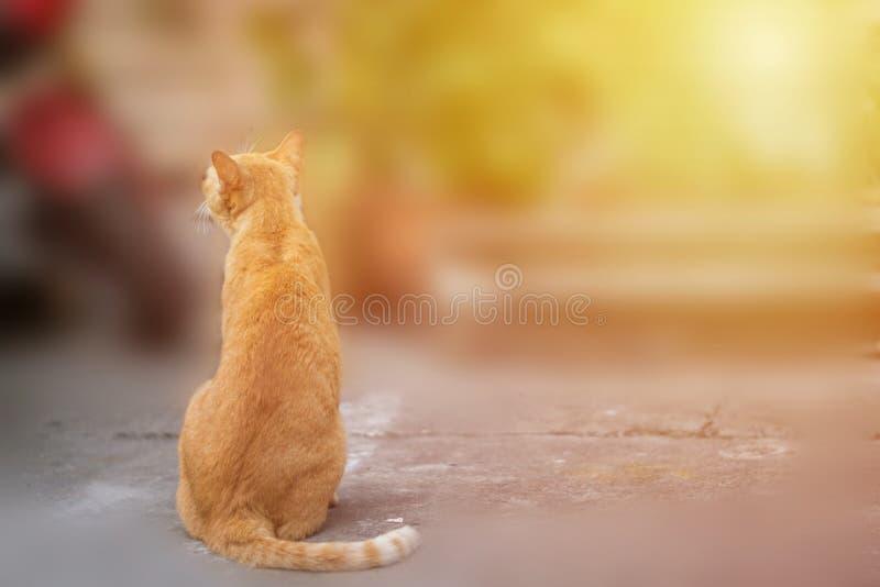 Sitzende Katze stockfotografie