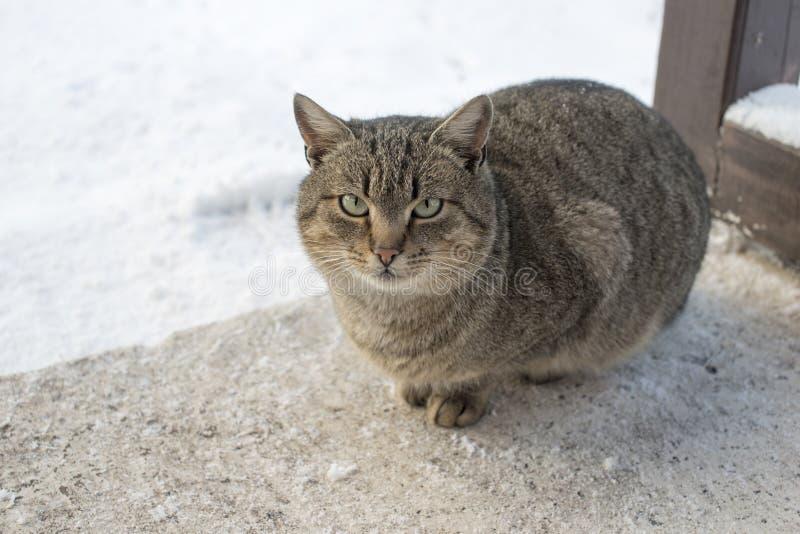 Sitzende Katze bis zum Winter stockfoto