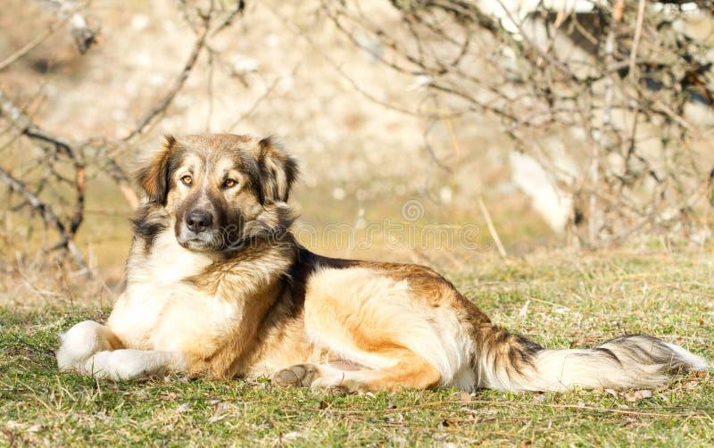 Sitzender Hund in der Natur lizenzfreies stockbild