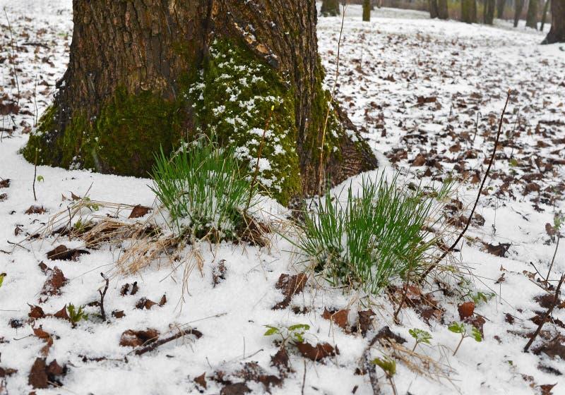Sitzung von Winter und von Frühling 3 stockfoto
