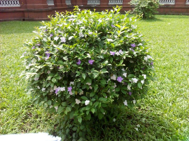 Siuli kwiat kolor zdjęcie stock