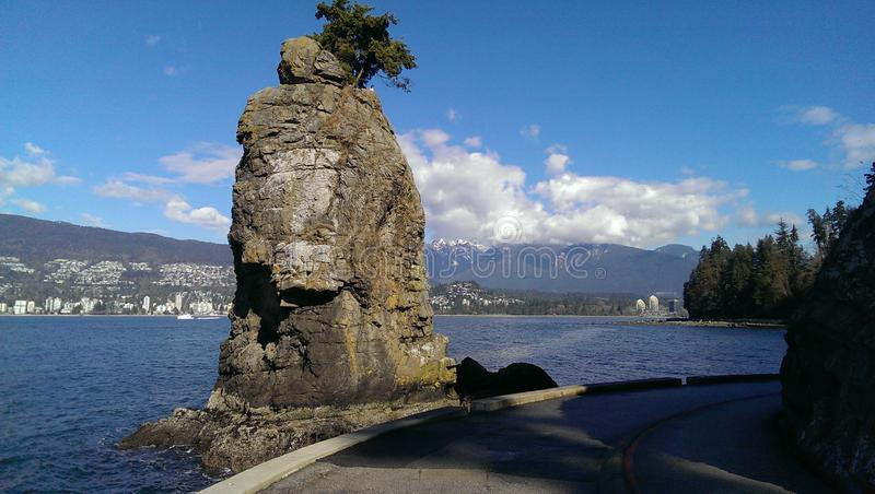 Siwashrots in Stanley Park, Vancouver royalty-vrije stock foto