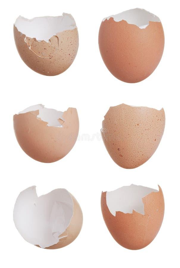 Free Six Broken Egg Shells Royalty Free Stock Photo - 13484435