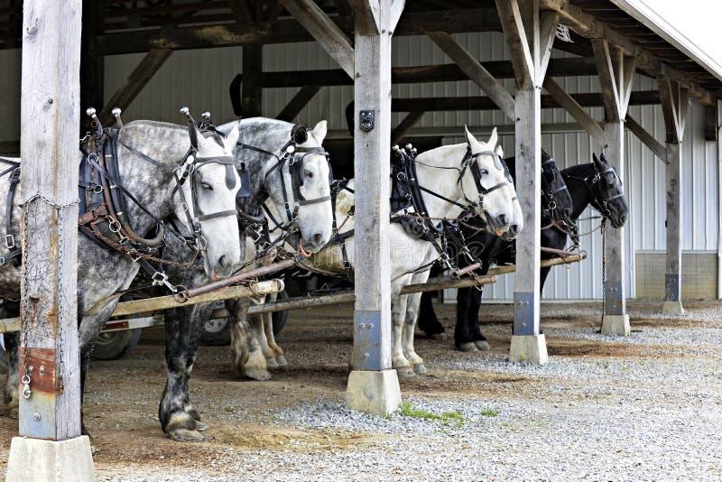 Six chevaux attendant l'action photographie stock