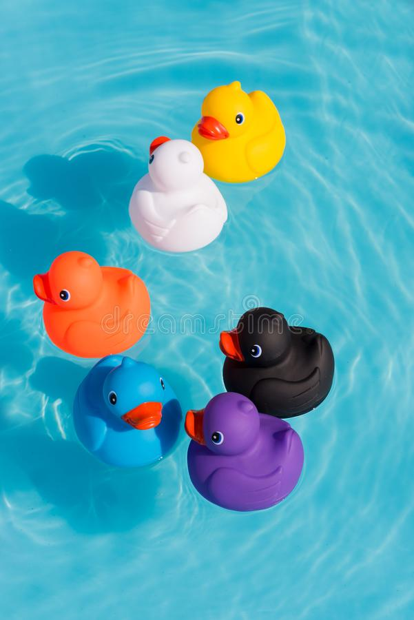 Free Six Colourful Rubber Ducks, A Family Of Ducks Stock Images - 125169724