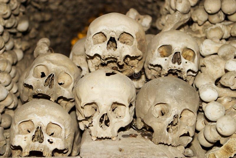 Six crânes humains photographie stock libre de droits