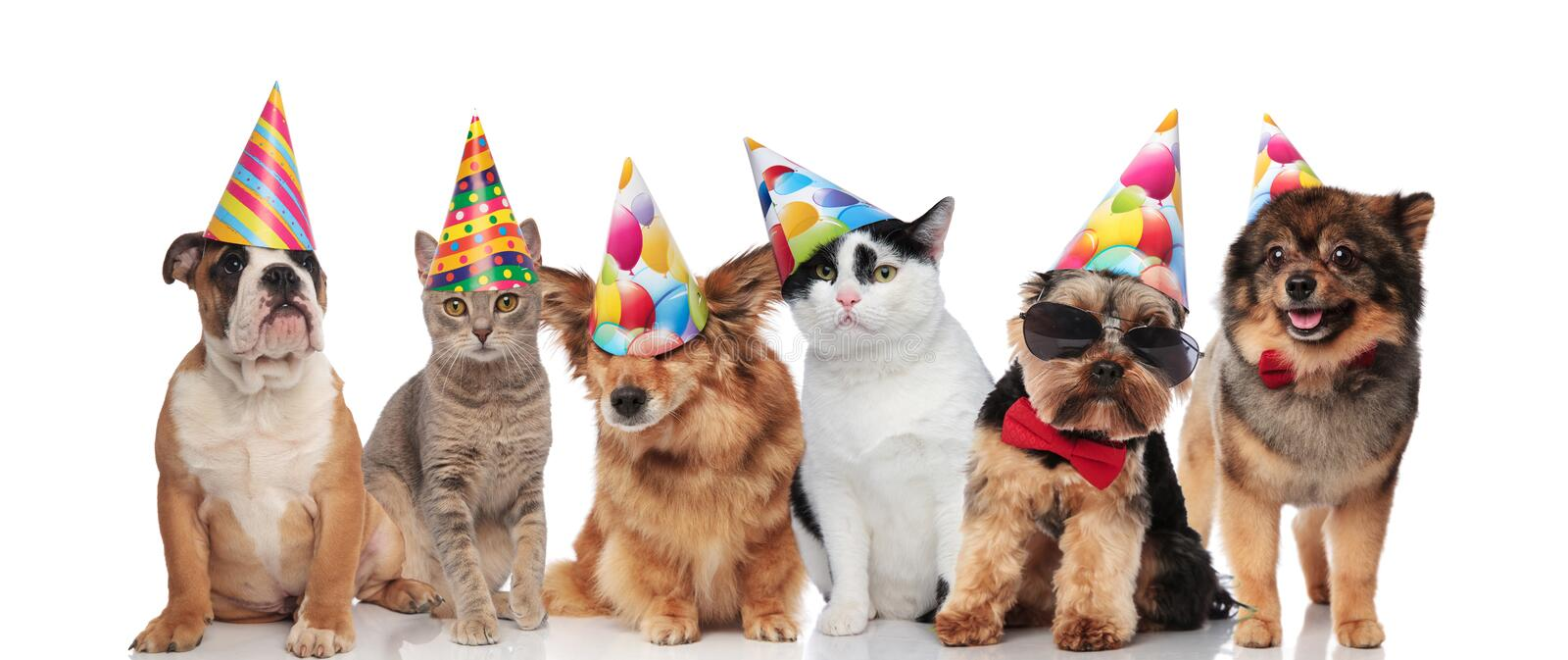 Six cute dogs and cats wearing birthday hats. Six cute dogs and cats wearing colorful birthday hats while sitting and lying on white background stock photography