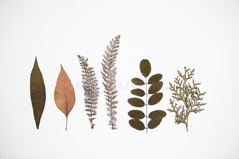 Six dry plants on white background stock photos