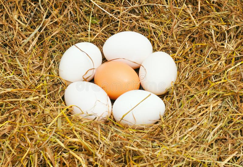 Six Eggs Free Stock Photos